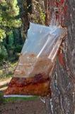 Bag of Resin Stock Photo