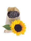 Bag with seeds and sunflower isolated on white Royalty Free Stock Images