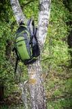 Bag on the tree Stock Image