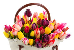Bag  of tulips flowers close up Royalty Free Stock Photography