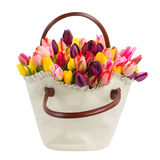 Bag  of tulips flowers. Bag   of spring  tulips flowers   isolated on white background Stock Image