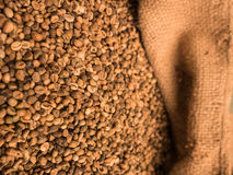 Bag of unroasted coffee beans Royalty Free Stock Photo