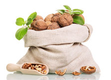 Bag of walnuts, and  scoop with kernels isolated on white. Royalty Free Stock Image