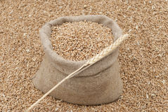 Bag of wheat. Stock Photography