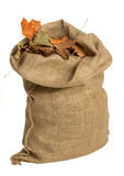 Bag With Leafs Stock Image