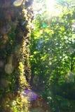 Bagażnik drzewo przerastający z mech i słońca świeceniem obraz stock