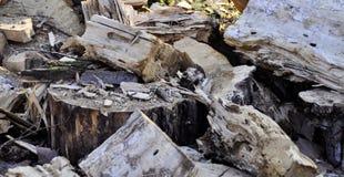 Bagażnik drzejący kawałki z ax drzewo Zdjęcie Royalty Free