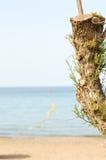 Bagażnik drzewa cięcie Zdjęcia Stock