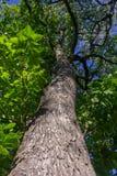 Bagażnik drzewo obraz stock
