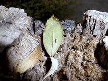 Bagażnik, liść, mrówka obraz stock