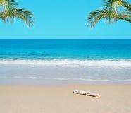 Bagażnik w raju zdjęcie royalty free