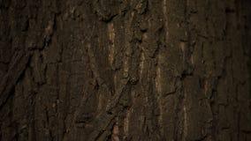 Bagażnik zamknięty w górę duży drzewo, natura i lasowa ochrona, ekologii opieka, botanika fotografia stock