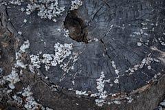 Bagażnika cięcie Stara drewniana tekstura z pieczarkami zdjęcia stock