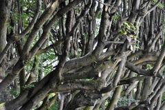 Bagażniki i gałąź drzewa Obrazy Royalty Free