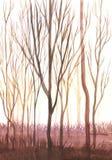 Bagażniki nadzy drzewa w słońcu ilustracja, krajobraz fotografia royalty free