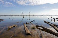Gumowy drzewo przy Jeziornym Mulwala, Australia Zdjęcia Stock