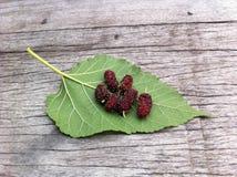 baga/amoreira vermelhas na folha/fundo de madeira/de madeira /nature/natural /sour e no fruto doce/pronto para comer/comestível imagens de stock