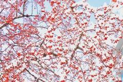A baga e a neve do inverno na neve do nordeste atacam 2014 Imagens de Stock Royalty Free
