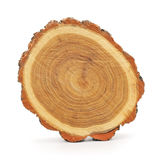 Bagażnik drzewo Obrazy Stock