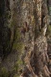 Bagażnik stary drzewo Zdjęcie Stock