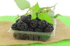 Baga preta do fruto no recipiente Imagem de Stock Royalty Free