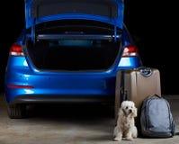 Bagagem do protetor do cão ao lado do carro fotografia de stock royalty free