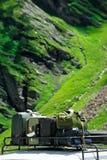Bagaje de los turistas en las montañas Fotos de archivo libres de regalías