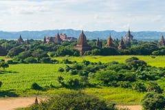 Bagan塔和修道院呈绿色季节的,曼德勒,缅甸 免版税库存照片