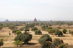 Bagan,缅甸废墟  库存照片