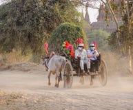 在农村路的一个黄牛推车在Bagan,缅甸 图库摄影