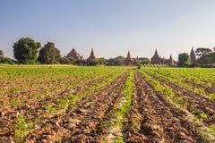 Bagan Burma immagini stock libere da diritti