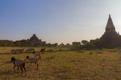 Bagan Burma fotos de archivo libres de regalías