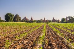 Bagan Burma Royalty Free Stock Images