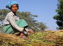 BAGAN, MYANMAR - DECEMBER 21. 2015: Burmese woman sitting on hay bales guiding an ox cart through rural area stock photos
