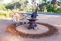 BAGAN, MYANMAR - November 19, 2015: Extracting oil from peanuts Stock Photos