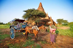 Bagan, Myanmar - October 9, 2013: Burmese man with pony cart at Bagan Royalty Free Stock Photos