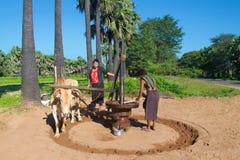 Bagan, Myanmar - October 2015: Laborers grinding palm sugar by a manual method. Laborers grinding palm sugar by a manual method in Bagan, Myanmar stock image