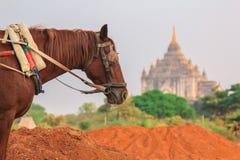 Bagan Myanmar, pagod Royaltyfri Fotografi