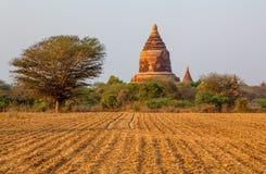 Bagan - pagoda nel campo Immagini Stock