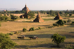 Bagan temples in Myanmar (Burma) Royalty Free Stock Photos