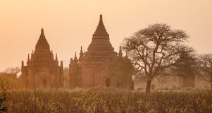 Bagan temples in the sunset Royalty Free Stock Photos