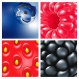bagas Close-up Framboesas, mirtilos, amoras-pretas, morangos Fundo da baga ilustração royalty free