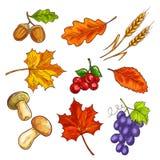 Bagas com folhas e cogumelo de outono Fotografia de Stock Royalty Free