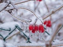 Bagas com neve e gelo no inverno Fotos de Stock Royalty Free