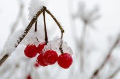 Bagas congeladas do inverno imagens de stock royalty free