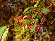 Bagas cor-de-rosa bonitas na árvore do outono ilustração royalty free