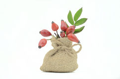 Bagas cor-de-rosa selvagens Imagem de Stock
