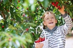 Bagas da colheita da criança imagens de stock royalty free