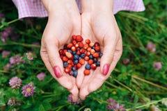 Bagas da floresta nas mãos dos mirtilos e das morangos Imagem de Stock Royalty Free
