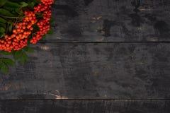 Bagas de Rowan no canto do fundo de madeira da tabela Foto de Stock